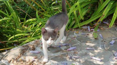 Un pisisc In padure la Coveanu