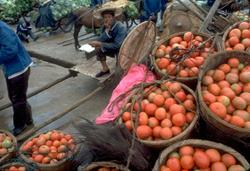 colour photograph of fruit-seller