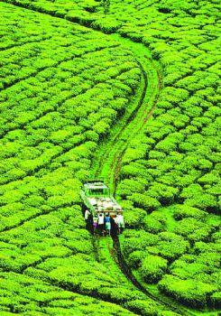 Agricultural Field.jpg