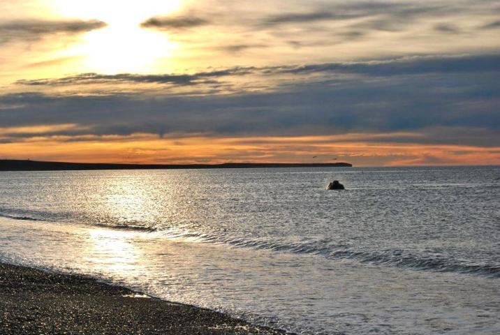 Ballenas en Puerto Madryn - Playa El Doradillo
