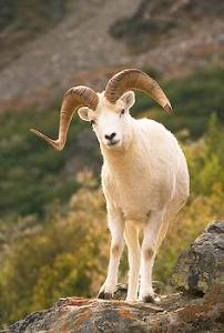 Righteous RAM | Growing in the pattern of Christ the Righteous Ram of God.