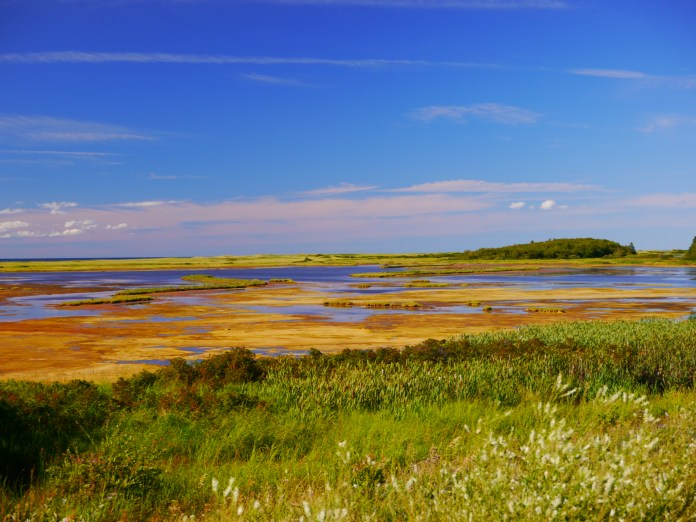 A lovely marsh along the approach to the Bridge.