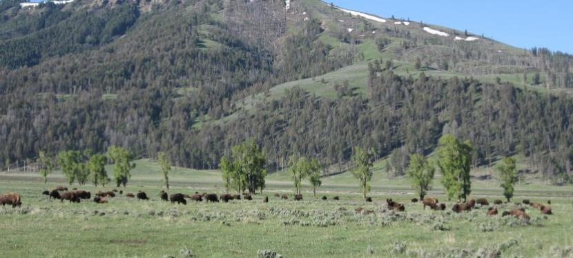 Range Roaming – Wyoming 2013 – Day 56