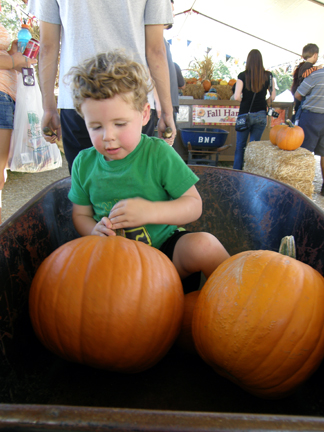 Toddler in a wheelbarrow with pumpkins