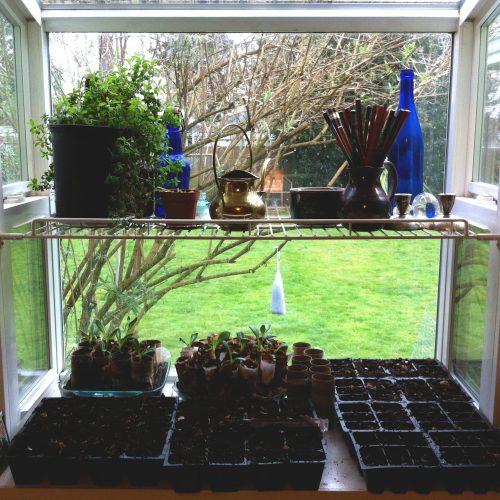 Seedlings in Window Box