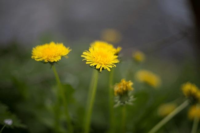 Speckled Spring