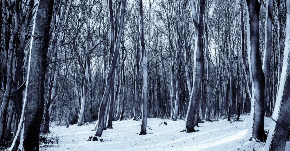 The Winter Journey