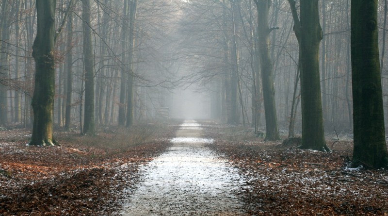 Creepy road in the woods