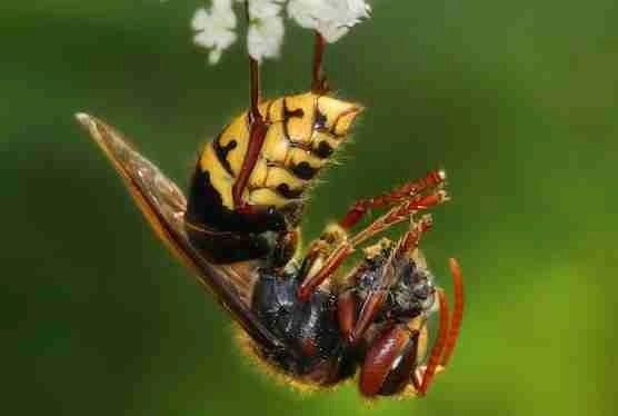 Meet a few bees