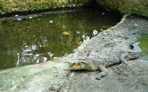 Taman Hewan Pematang