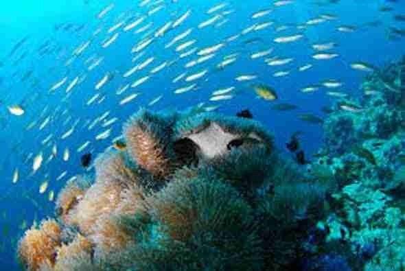 El Coral Reef Subic Philippines