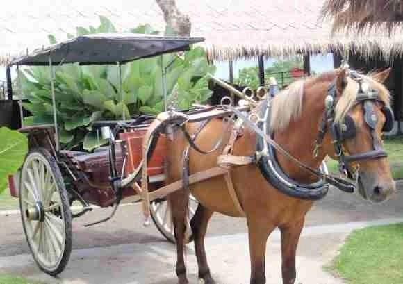 Dokar in Kuta Bali