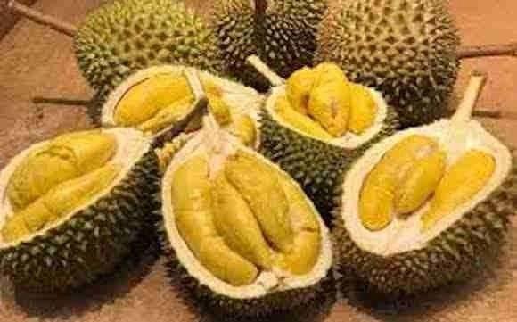 The Durian fruit Kampot Cambodia
