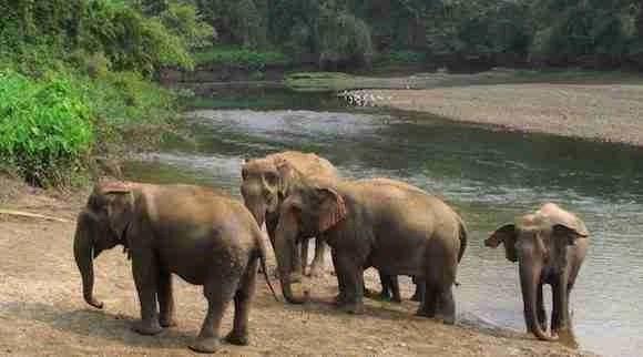 Elephant World in Kanchanaburi Thailand