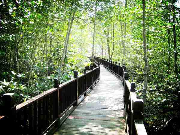 Kukup Johor National Park