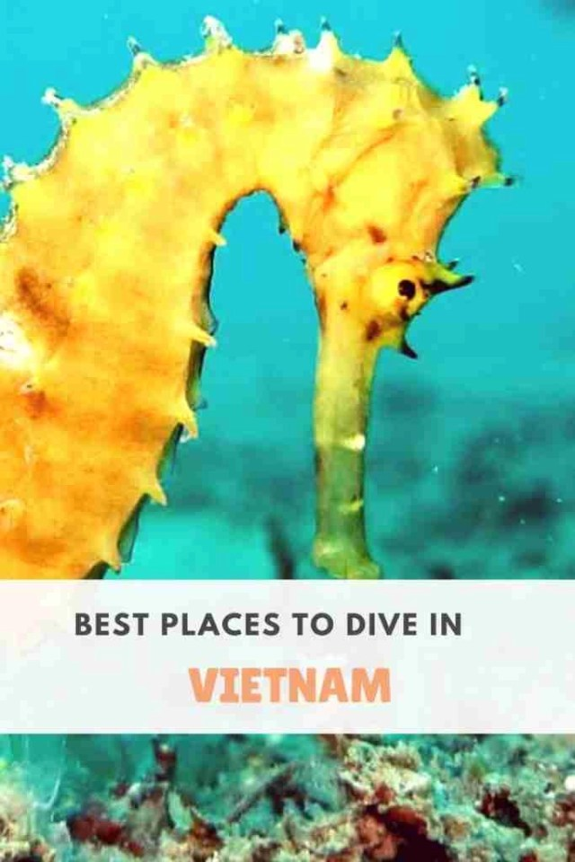 Best Dive Sites in Vietnam