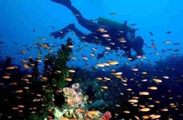 Dive in Da Naag