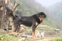 There were, of course, many stray dogs to keep us company along the way. This one looks particularly happy to see us.