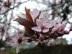 blossom-leaves-2