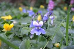 frosty-flowers