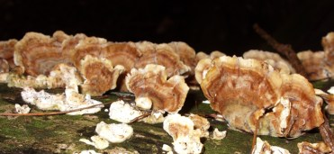 fungi-feb-13-2