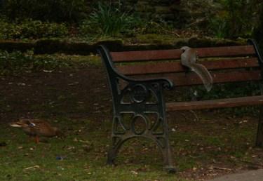wye-squirrel-duck-2
