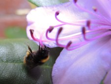 early-bumble-rhod-3