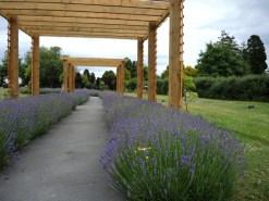 garden-remembrance-2