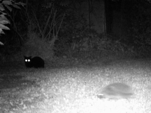 hedgehog-and-cat