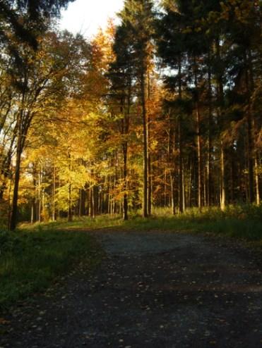 autumnal-trees-2