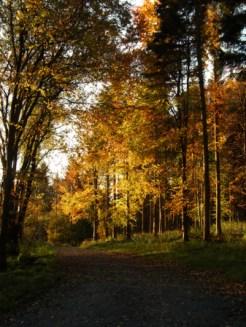 autumnal-trees-3