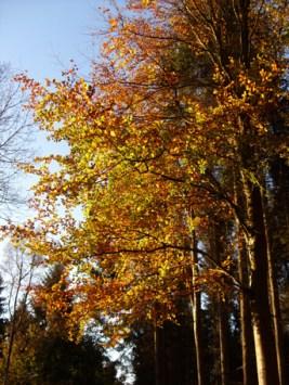 autumnal-trees-4