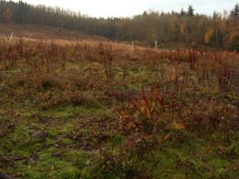 grazing-area-1