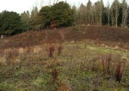 grazing-area-3
