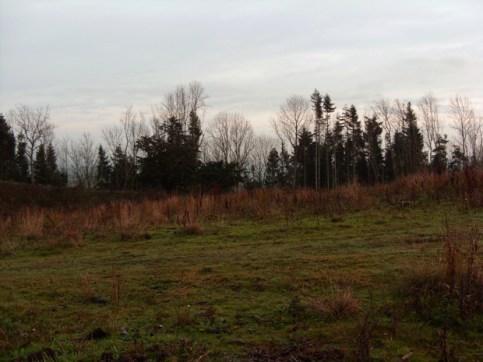 grazing-area-5