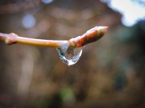 drop-drip