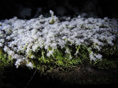 frosty-moss-2