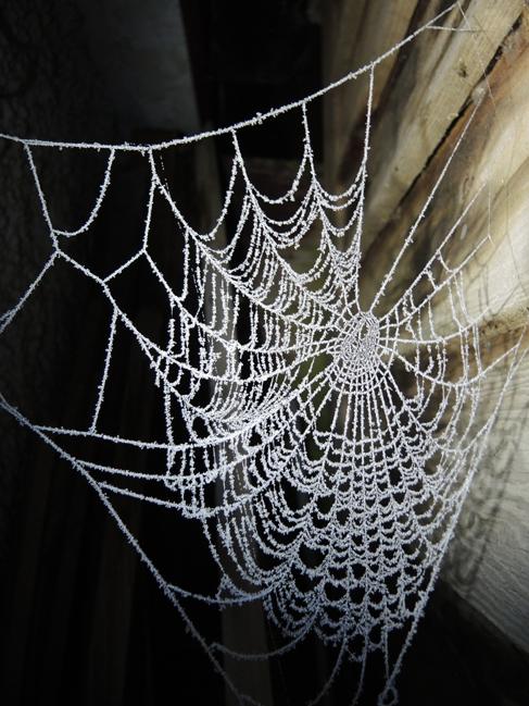 frosty-web-2