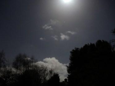 moonlight-220116