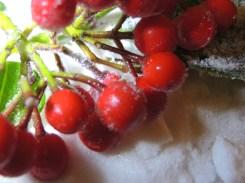 sugar-berries-3