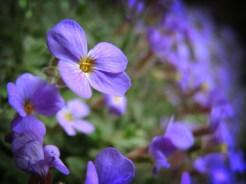 wall-flower-cu