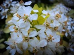 wet-white-blossom