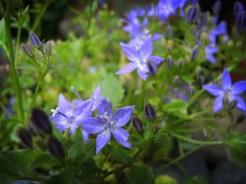 alpine-blue-cu-140616