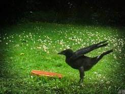 crow-fluffy-pants