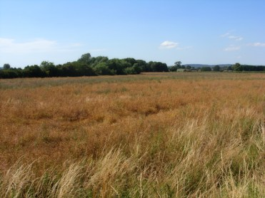 Photo of field in summer