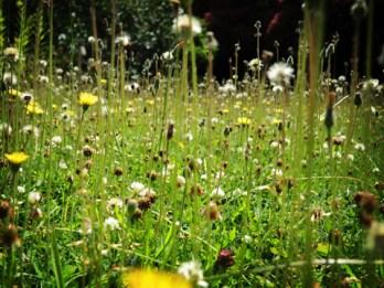 lawn-070716