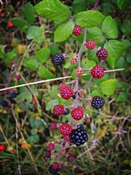 Photo of blackberries