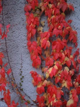 Photo of autumnal leaves