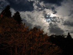 moonlit-bushes-1
