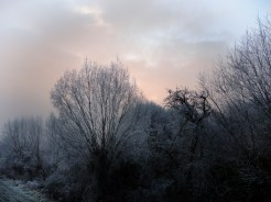 frosty-trees-8